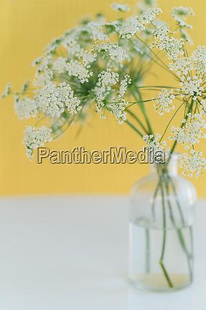 bouquet of queen annes lace daucus