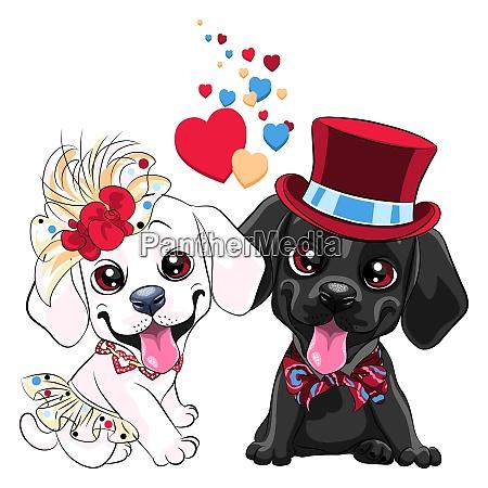 lovers cute labrador retriever dogs