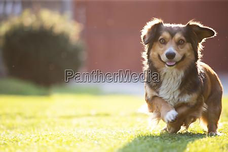 small dog in fresh green grass