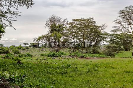 african tropical landscape in amboseli