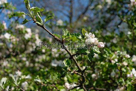 branch plant tree white flowers