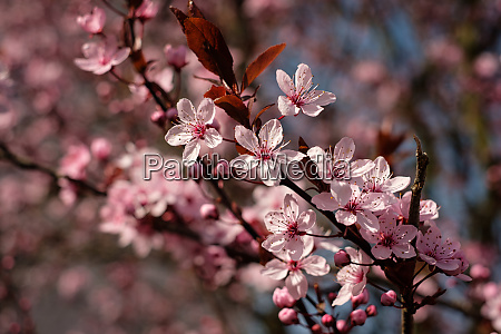 pink flowers at a shrub in