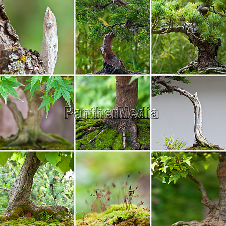 collection of bonsai tree close up