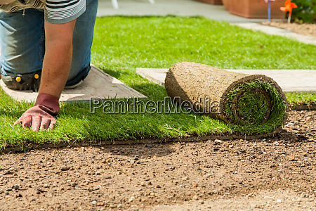 gardening gardener laying sod for