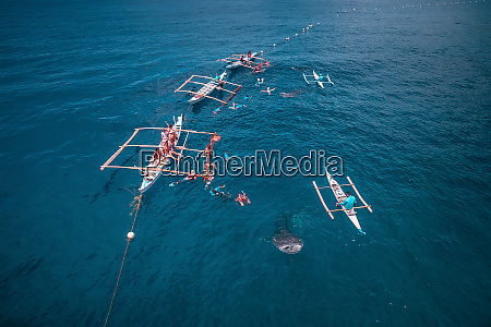 aerial view of oslob whale shark