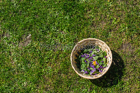 spring flowers in a basket on