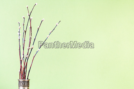 bunch of flowering pussy willow twigs