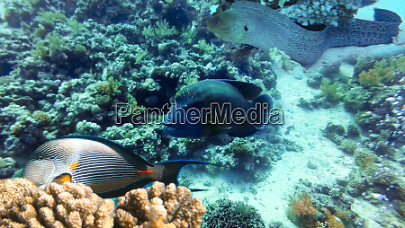 underwater, world., coral, fishes, of, red - 28353255