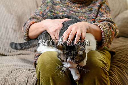 unrecognizable old woman stroking a cat