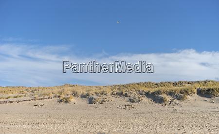 sand dune near kampen