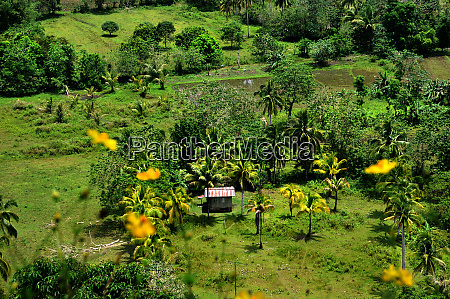 landscape on bohol in the philippines