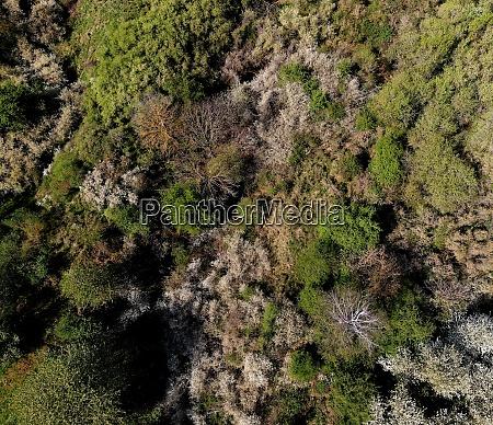 habitat forest