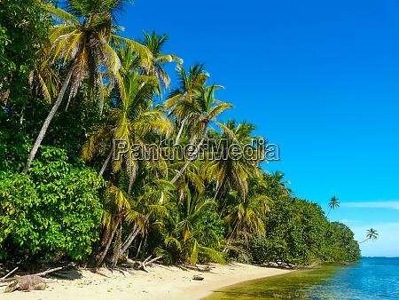beach in cahuita national park caribbean
