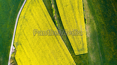 aerial view of the yellow flower