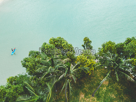 aerial view of palm trees stand