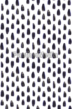 sunflower seeds pattern isolated background detailed