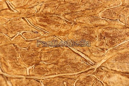 coconut nut fibers surface texture natural