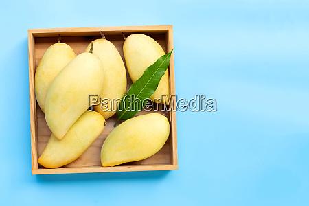 tropical fruit mango in wooden box