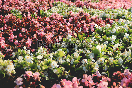 central park flowers flowerbed surface many
