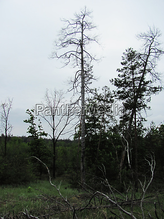forest photo lonely trees and