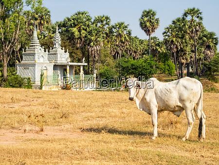 cambodian countryside roka ar