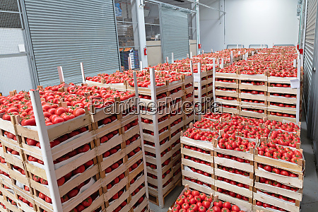 storage tomatoes