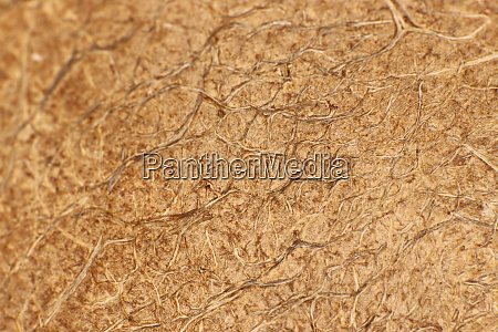 coconut palm plant nut fibers surface