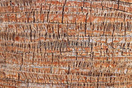exotic wood backdrop palm bark pattern