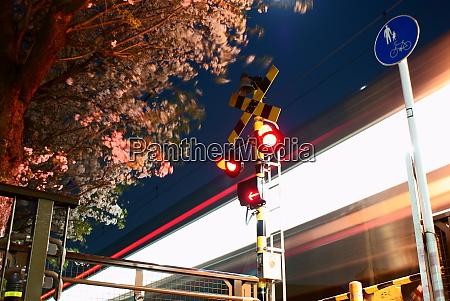 sakura and inokashira line keio
