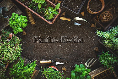composition with plants and gardening tools