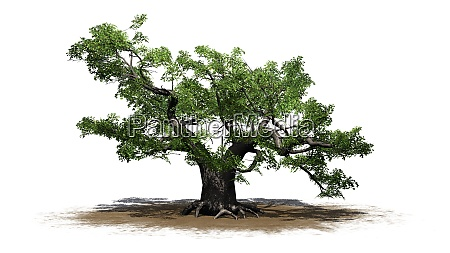 green japanese maple tree on a