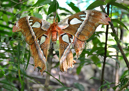 butterfly in the philippines