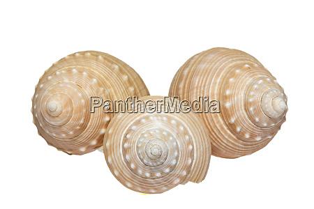 some seashells of sea snail isolated