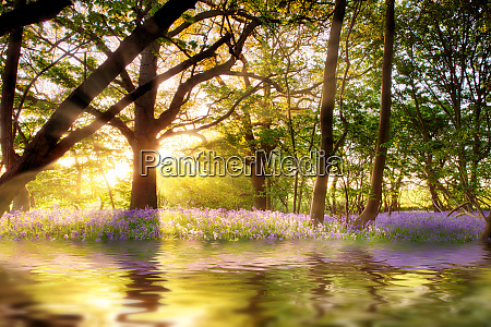 magical pond in bluebell forest