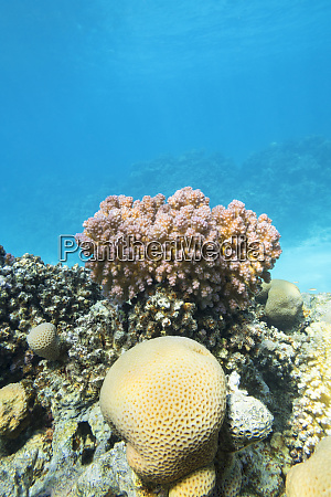 colorful coral reef at the bottom