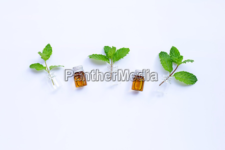 fresh mint leaves with essential oil