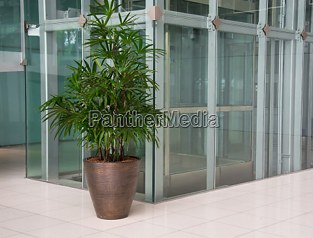 office corridor with palm trees in