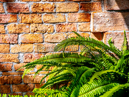 abstract plant wall background the green