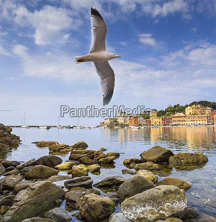 seagull flies over the bay of