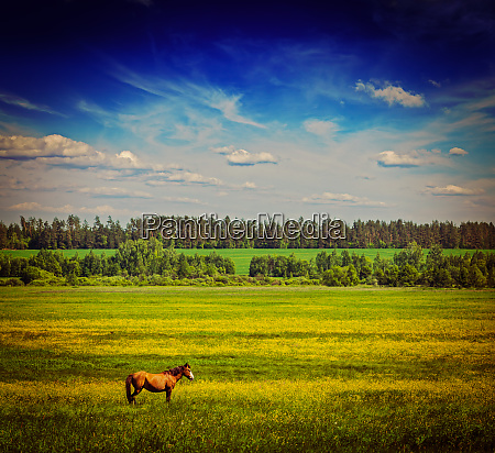 spring summer green field scenery lanscape