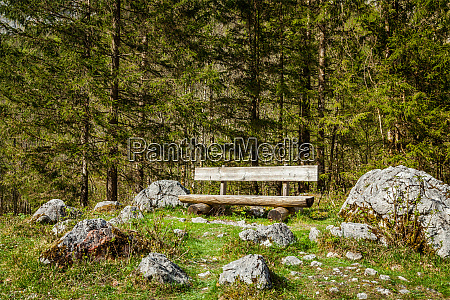 lonely bench in forest