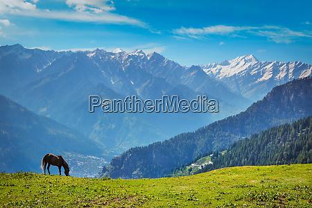horse in mountains himachal pradesh india
