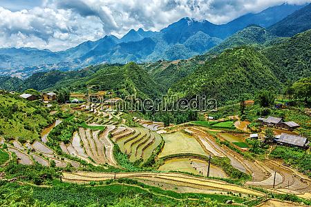 rice field terraces near sapa mui