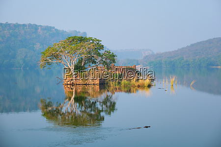 serene morning on lake padma talao