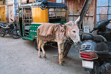 donkey in indian street