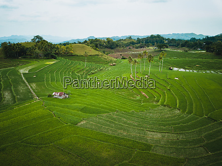 aerial view of guindulman bohol philippines