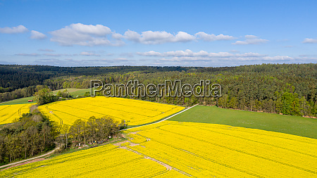 aerial view of rapeseed fileds in