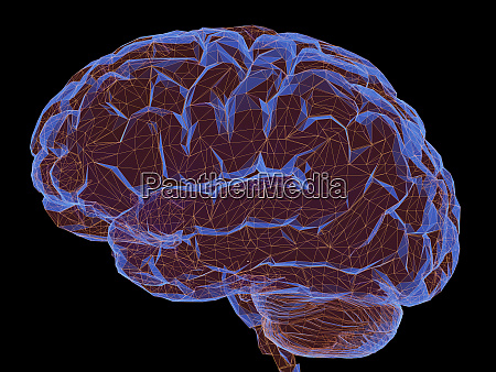 human brain nervous system power connections