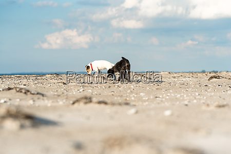 dogs at beach on the darss