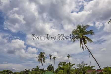 palmtrees rising in the blue sky
